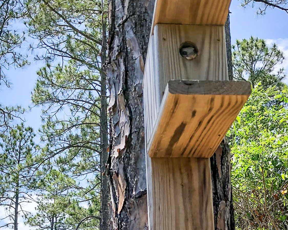 Bird House on tree trunk