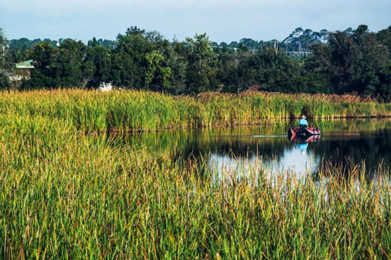 Fishing in the Grasses
