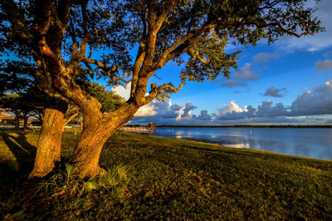 Lake Shelby Tree