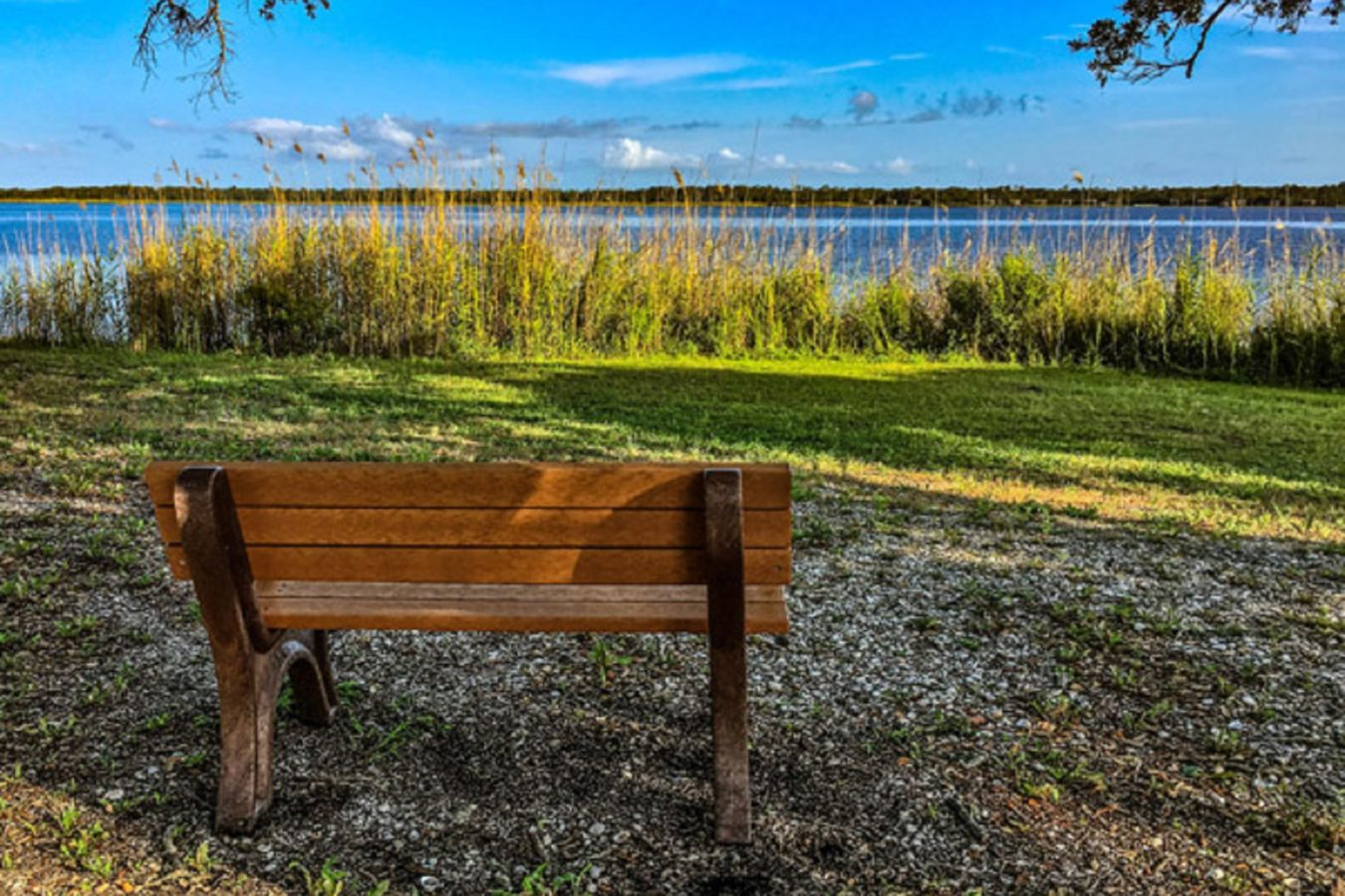 Bench overlooking the lake